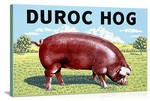 Duroc Hog Vintage Printed On Canvas