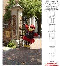 South Carolina University Campus Mascot at Gates Photo Print 15
