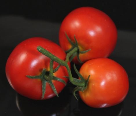 Fake Food 3 Tomato On The Vine