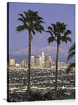 Los Angeles, California Palmtree Panorama Picture