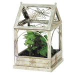 White Daisy Terrarium Distressed White