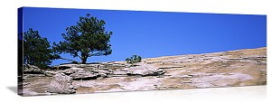 Trees on Stone Mountain Atlanta Georgia Panoramic Picture