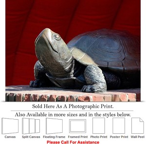 "University of Maryland College Fear the Turtle Photo Print 24"" x 18"""