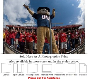 "University of Arizona Wilbur at the Football Game Photo Print 24"" x 16"""