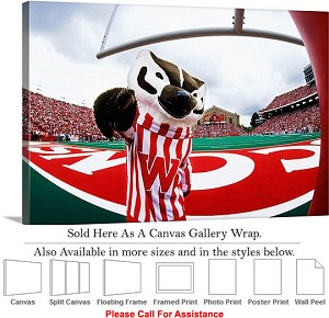 "University of Wisconsin Sport Mascot Bucky Badger  Canvas Wrap 30"" x 20"""