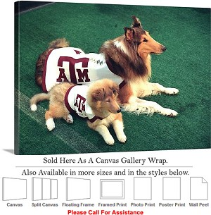 "Texas A&M University Reveille and Trainee Dogs Canvas Wrap 30"" x 22"""