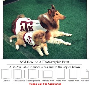 "Texas A&M University Reveille and Trainee Dogs Photo Print 24"" x 17"""