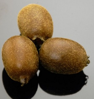 Fake Food Australian Kiwi Fruit (bag of 3)