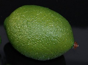 Fake Food Jumbo Lime - One Piece