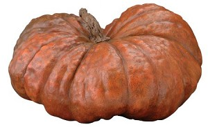 Fake Food Wide Natural Stubby Turban Pumpkin