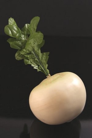 Fake Food Large White Radish
