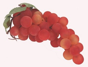 Fake Food Grapes Red - One Bunch