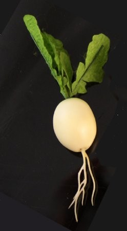 Fake Food White Radish - One Piece