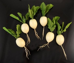 Fake Food White Radish Assortment pack of 6