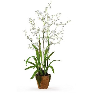 Dancing Lady Silk Orchid Arrangement W/Moss Pot