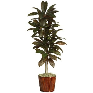 "64"" Cordyline Silk Plant (Real Touch)"