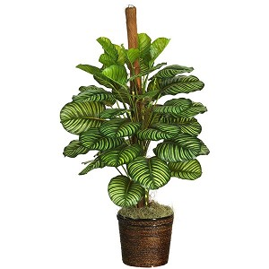 "55"" Calathea Silk Plant (Real Touch)"