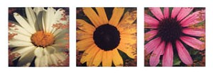 Flower Daze Canvas Set of 3