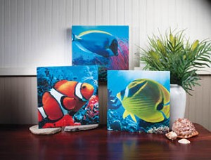 Tropical Fish Canvas Set of 3