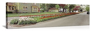 Holland, Michigan Tulip Display Panorama Picture