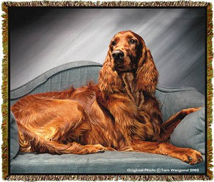 Irish Setter Tom Weigand © Tapestry
