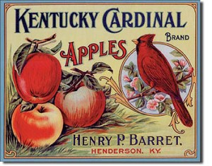 Kentucky Cardinal Apples Tin Sign