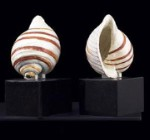 Metal Sea Shell Bookends - Set of Two