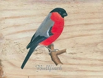Bullfinch Vintage Metal Sign