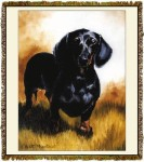 Dachshund Ruth Maystead © Tapestry