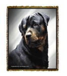 Rottweiler 2 Tom Weigand © Tapestry