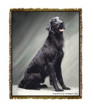 Flat Coated Retriever Tom Weigand © Tapestry