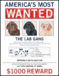 Wanted The Lab Gang Tin Sign