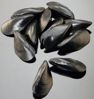 Fake Food Mussels (12 pc)