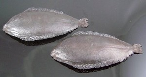 Fake Food Sole Fish (pack of 2)