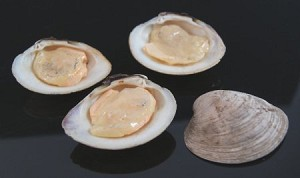 Fake Food Clams On Half Shell (pack of 3)