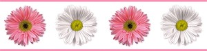 Flower Power Pink and White Peel and Stick Border